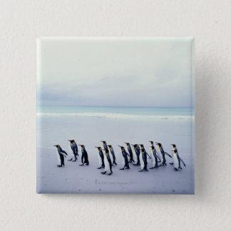 King penguins (Aptenodytes patagonicus) 15 Cm Square Badge
