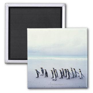 King penguins (Aptenodytes patagonicus) Magnet