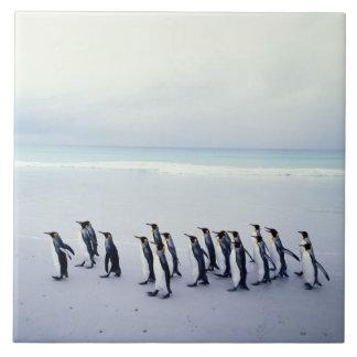 King penguins (Aptenodytes patagonicus) Tile