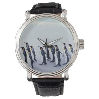 King penguins (Aptenodytes patagonicus) Wristwatch