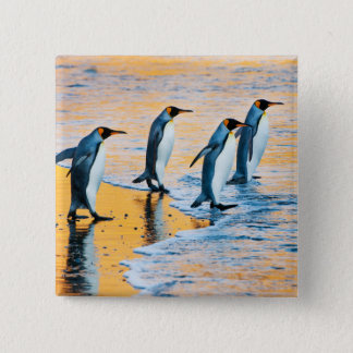 King Penguins at Sunrise - button