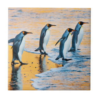King Penguins at Sunrise - tile
