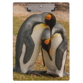 King penguins caressing, Falkland Clipboard