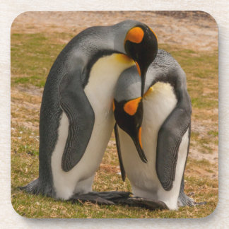 King penguins caressing, Falkland Coaster
