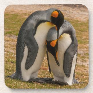 King penguins caressing, Falkland Coasters