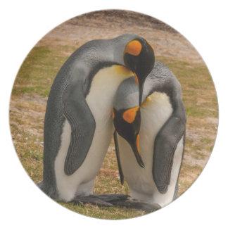 King penguins caressing, Falkland Plates