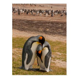King penguins caressing, Falkland Postcard