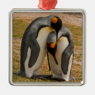 King penguins caressing, Falkland Silver-Colored Square Decoration