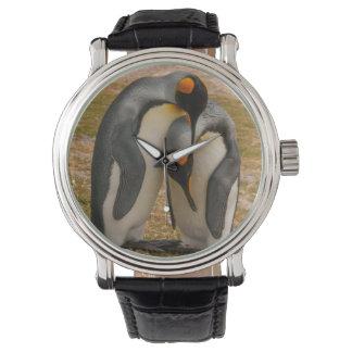 King penguins caressing, Falkland Wrist Watch