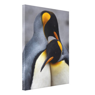King Penguins in Love Wrapped Canvas Print