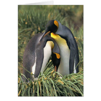 King penguins Lovers Greeting Card
