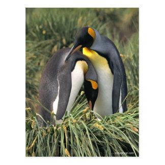 King penguins Lovers Postcard
