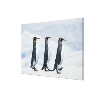 King Penguins walking in single file Canvas Print