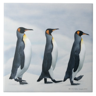 King Penguins walking in single file Large Square Tile