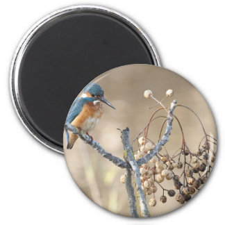 Kingfisher at Hula Reserve 6 Cm Round Magnet