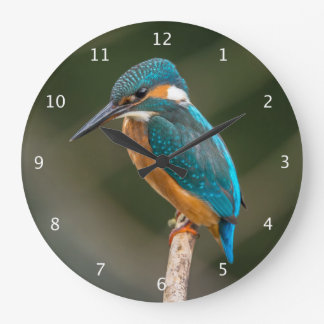 Kingfisher bird beautiful round wall clock