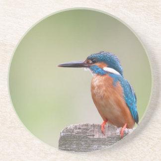 Kingfisher bird. coaster