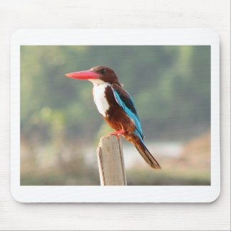 Kingfisher Bird Mouse Pad