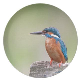 Kingfisher bird. plate
