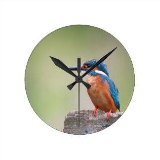 Kingfisher bird. round clock