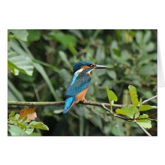 Kingfisher blank greeting card