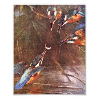 Kingfisher Feeding Babies Art Photo