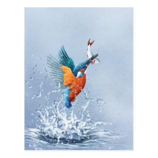 Kingfisher flying out of the water postcard