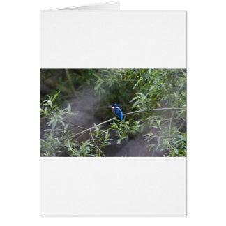 kingfisher.jpg card