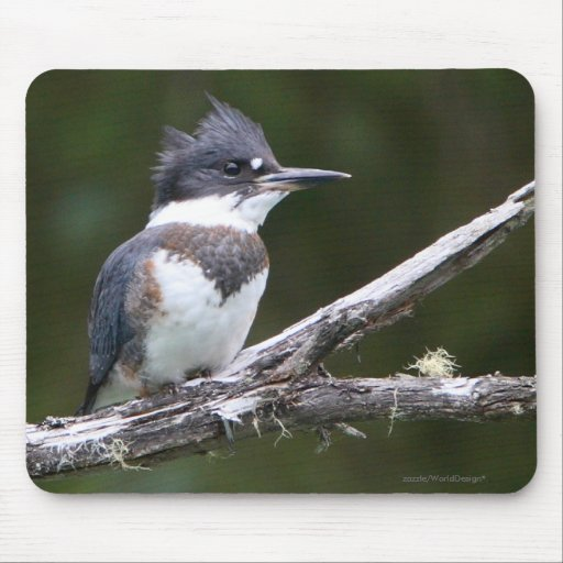 kingfisher mouse pads