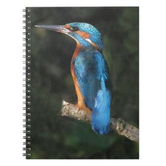 Kingfisher Notebooks