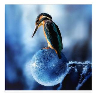Kingfisher On Frozen Bubble Acrylic Wall Art