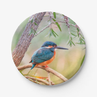 Kingfisher Perched on Branch Paper Plate