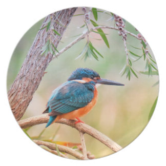 Kingfisher Perched on Branch Plate