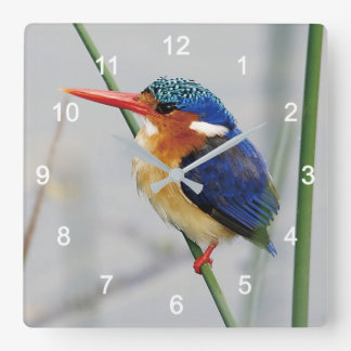 Kingfisher Square Wall Clock