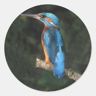 Kingfisher Round Sticker