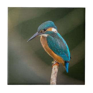 Kingfisher Tile