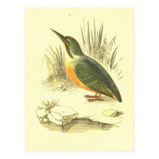 Kingfisher Vintage Bird Lithograph Postcard