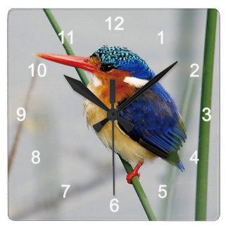 Kingfisher Wallclocks