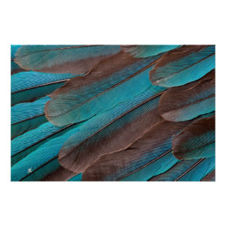 Kingfisher Wing Feathers Poster
