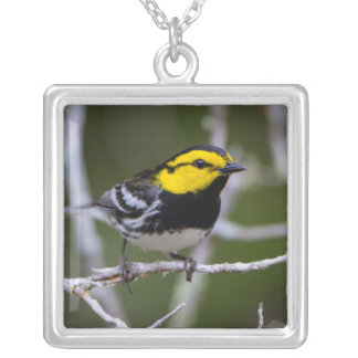 Kinney County, Texas. Golden-cheeked Warbler Silver Plated Necklace