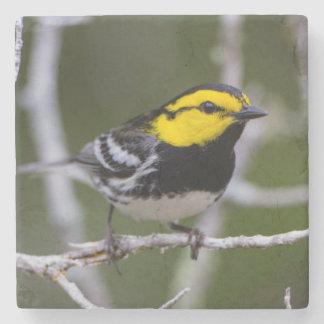 Kinney County, Texas. Golden-cheeked Warbler Stone Coaster