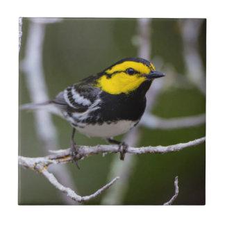 Kinney County, Texas. Golden-cheeked Warbler Tile