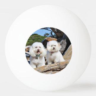Kirby Shelby - Poodles on Carmel Beach