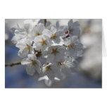 Kirschblüte Grusskarte Karte