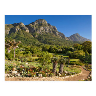 Kirstenbosch Botanic Gardens, Cape Town Postcard