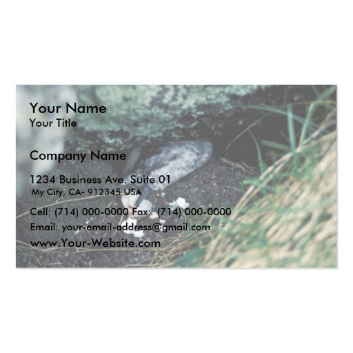 Kiska Island Sirius Point, Auklet killed by rat Business Card Template