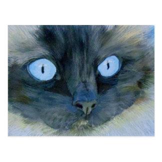 Kismet the Ragdoll Cat Postcard