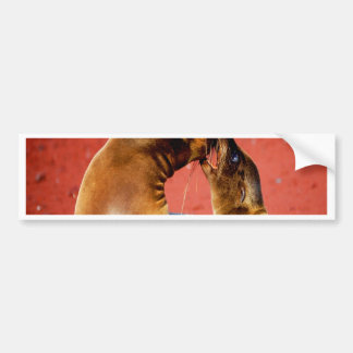 Kiss and love sea lion beach sand sea bumper sticker