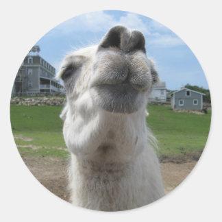 Kiss Me Llama Close-up Classic Round Sticker