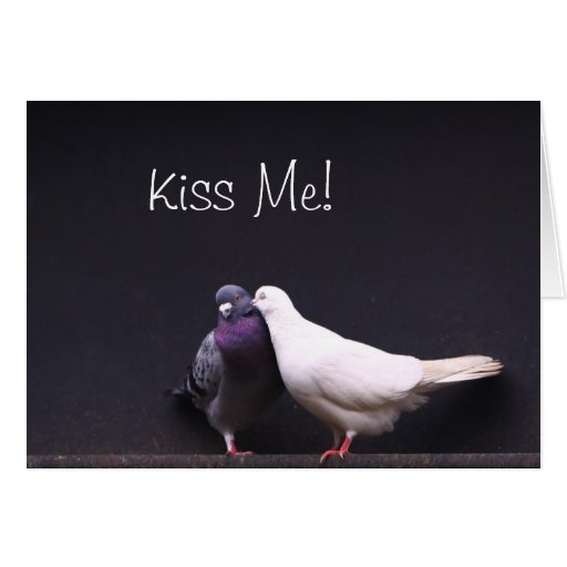 Kiss Me Love Pigeons Valentine Card